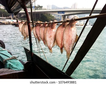 drying fish on a fisherman boat in Hong Kong