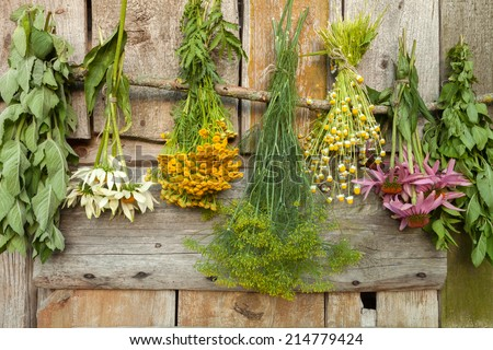 Drying medical herbs : echinacea,melissa,chamomile,dill and tutsan.