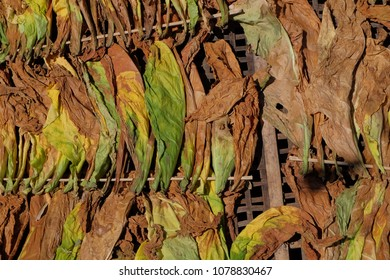 drying of tobacco leaves