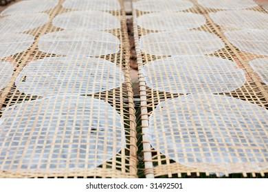 Drying Vietnamese Rice Paper Under Sun in Mekong Delta