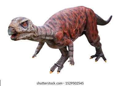 Dryosaurus is a herbivore genus of an Ornithopod dinosaur that lived in the Late Jurassic period, Dryosaurus isolated on white background with clipping path (Focus the eye of Dryosaurus)
