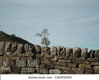 A drystone wall sits in the forefront, a single tree on a hill sits in the background on a summer day.