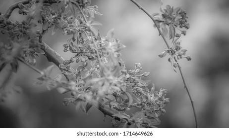 drzewo owocowe w kolorach czerni i bieli - Shutterstock ID 1714649626