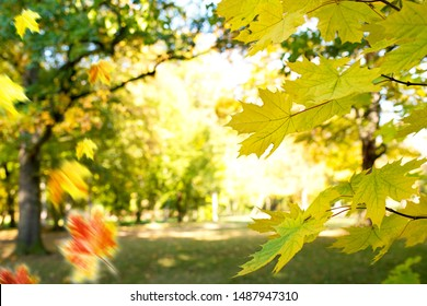 Dtail of maple leaves in the park in autumn