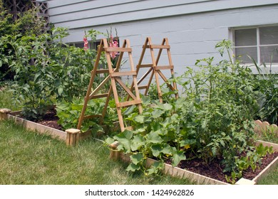 Dual thriving, outdoor, raised bed, vegetable gardens contained by a wood frame with wood lattices for climbing plants