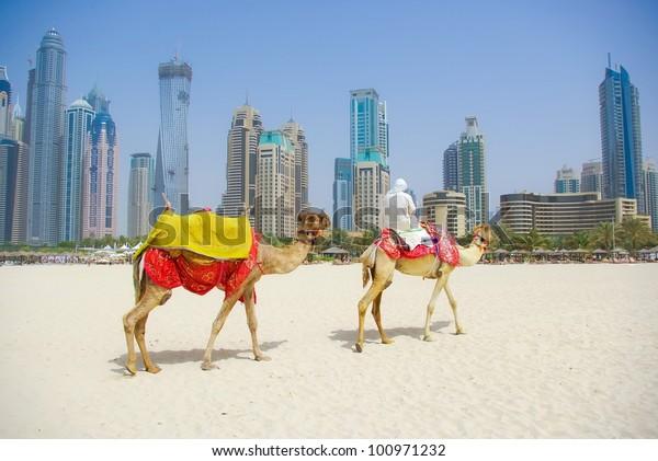 Dubai Camel on the town scape background, United Arab Emirates