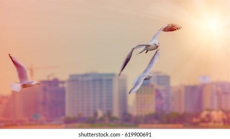 Dubai Seagull at sunset