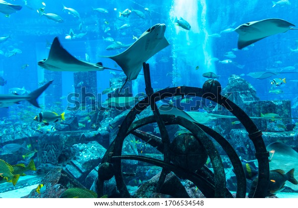 DUBAI, UAE - APRIL 5, 2020:  Lost chambers - Large aquarium in Hotel Atlantis in Dubai, United Arab Emirates