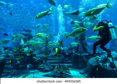 DUBAI, UAE - DECEMBER 5: Large aquarium in Hotel Atlantis in Dubai, UAE. December 5, 2015 in Dubai, United Arab Emirates