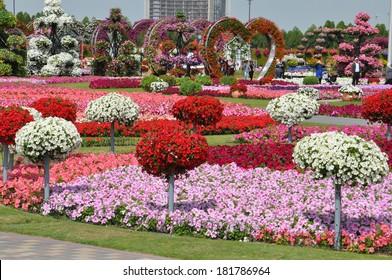 DUBAI, UAE - FEBRUARY 8: Dubai Miracle Garden in the UAE, as seen on February 8, 2014. It has over 45 million flowers.