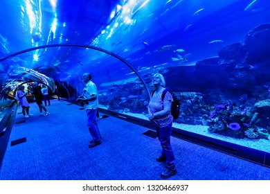 DUBAI, UAE - JAN 20, 2019: Dubai mall with its famous big aquarium and its tunnel thru the tank. People looking at the aquatic life.