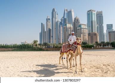 DUBAI, UAE - JANUARY 12, 2019: Bedouin with camels on the background of Dubai Marina skyscrapers.