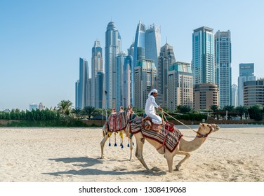 DUBAI, UAE - JANUARY 12, 2019: Bedouin with camels on the background of Dubai Marina skyscrapers
