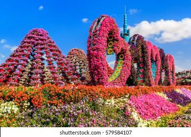 Dubai, UAE - January 5, 2017.  Dubai Miracle Garden -Landscape flower arrangement in the form of heart and peaks. Dubai Miracle Garden is the largest natural flower garden in the world