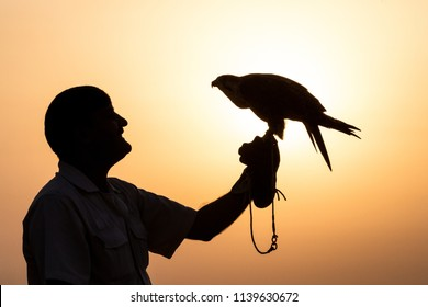 Dubai, UAE - Jul 13th, 2018: Silhouette of a saker falcon in front of a sunrise in the desert perched on his male handler leather glove.