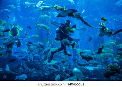 DUBAI, UAE - NOVEMBER 14: Huge aquarium in a hotel Atlantis on the Palm islands. Diver feeding fishes. Dubai November 14, 2012 in Dubai, United Arab Emirates