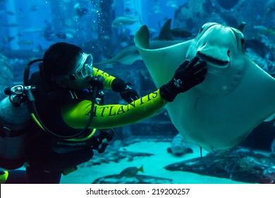 Underwater Hotel Dubai Images, Stock Photos & Vectors