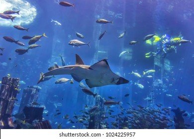 DUBAI, UAE - SEPTEMBER 7, 2015: A wide variety of fishes (more than 500 species fishes, sharks, corals and shellfish) in a huge aquarium in 5 stars Hotel Atlantis on man-made island of Palm Jumeirah.