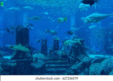 DUBAI, UAE UNITED ARAB EMIRATES - JAN 3, 2017: Lost chambers aquarium inside Atlantis Hotel on Palm Jumeirah