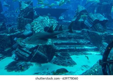 DUBAI, UAE UNITED ARAB EMIRATES - JAN 3, 2017: Detail of Lost Chambers aquarium inside Atlantis hotel on Palm Jumeirah