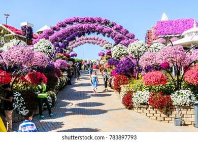 Dubai, United Arab Emirates - 12/28/2017 - Beautiful Flourish Landscape Miracle Flower Garden with over 45 million flowers in a sunny day, Dubai, UAE