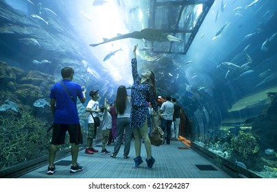 Dubai, United Arab Emirates – 25/October/2015 Tunnel under the Dubai aquarium on date in location. Girl touching the shark under the aquarium.