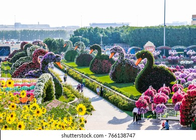 Flower Garden Dubai Images Stock Photos Vectors Shutterstock