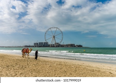 Dubai, United Arab Emirates - January 12, 2018: Bedouin with camel on a sandy beach in the background Dubai Eye and Dubai Ferris Wheel