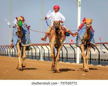 Dubai, United Arab Emirates - March 25, 2016: Practicing for camel racing at Dubai Camel Racing Club, Al Marmoom, UAE