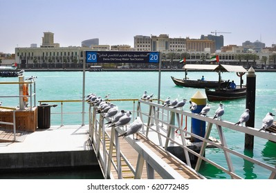 DUBAI,UAE - MARCH 12,20:Seagulls sitting in a port with ships in Deira