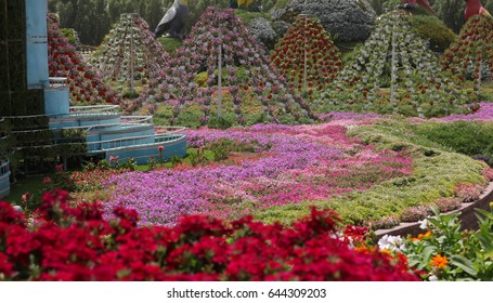 Dubai,UAE, Miracle Garden ,4 of May 2017 : Beatiful flowers in Desert