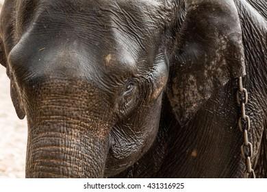 Dubare Elephant Camp - Coorg, Karnataka, India - 31/March/2016
