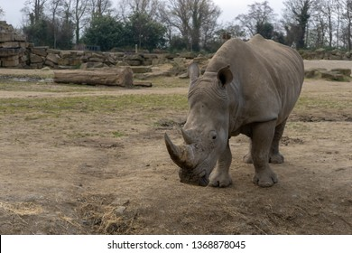 Rhino Family Images, Stock Photos & Vectors | Shutterstock