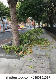 Dublin, Ireland: September 19 2018 - A fallen branch of tree blocks the pedestrian's pathway due to the emergence of Storm Ali. An orange warning is given for few counties in Ireland including Ireland