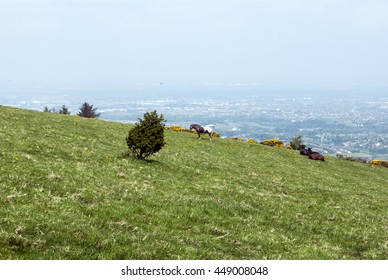 Dublin landscape seen from the hill in Tallaght