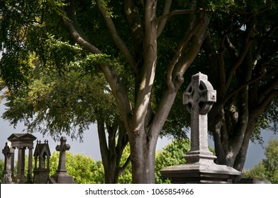 DUBLIN.IRELAND - September 13 , 2017: The tombstones in the shadow of beech trees  on the Glasnevin cemetery.
