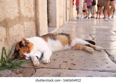 Dubrovnik, Croatia. Cat sleeping in Medieval Old Town.