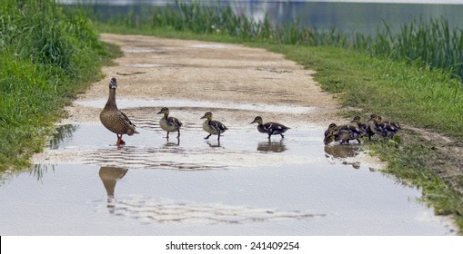 A duck is crossing a path with ducklings following her in a row,  stylized and filtered to resemble an oil painting