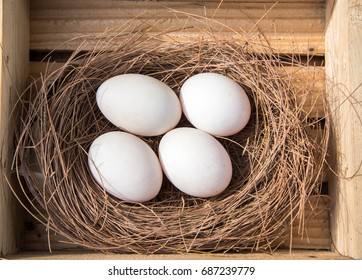 Duck egg and bird nests are in wooden boxes.