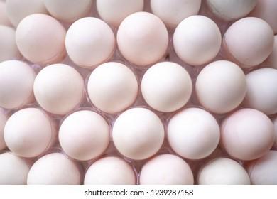 duck eggs pattern