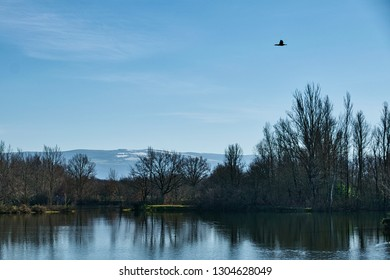 Duck flying over a lake with snow covered hills in the background