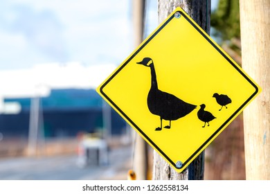 Duck or goose crossing sign at the side of a road. The sign shows a mother duck or goose and two ducklings or goslings.