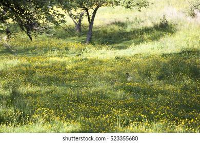 A duck on a field