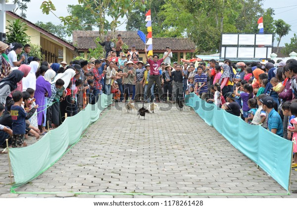 Duck Racing One Cultural Traditions Jumo Stock Photo (Edit