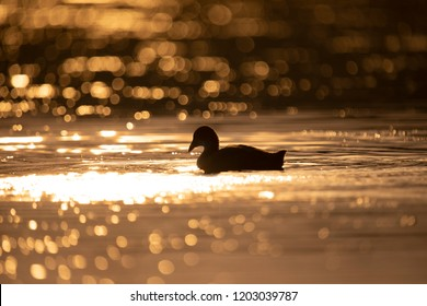 Duck silhouette water