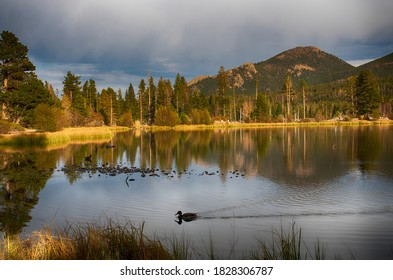 Duck in Sprague Lake at Rocky Mountain National Park