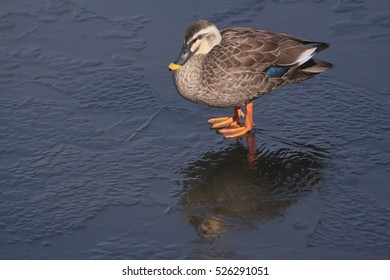 A duck stopped