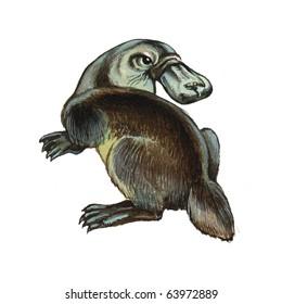 Duckbilled or Platypus
