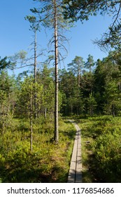 Duckboard trail in finnish forest at summer day