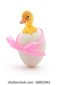 duckling coming out of a white egg